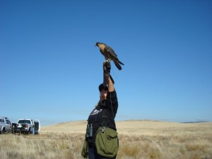 Falconry Rehab Conservation
